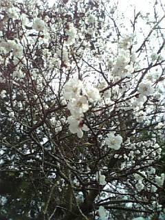 http://www.fukukomachi.com/blog/photo/100430_130741.jpg