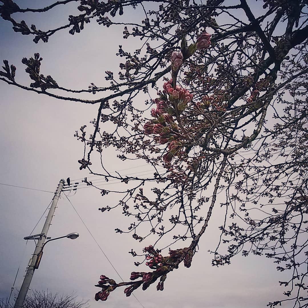 http://www.fukukomachi.com/blog/photo/IMG_20180418_102237_377.jpg