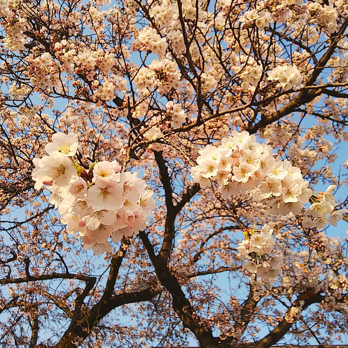 http://www.fukukomachi.com/blog/photo/IMG_20180421_054800_734.jpg